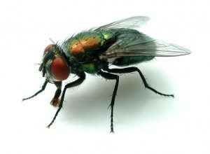 Fly Control for all your Flying Insect Exterminations