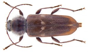 Wood Borer treatments by professional Pest Exterminators.