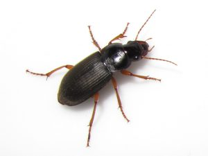 Insect Control Johannesburg deal with any casual intruder insects.