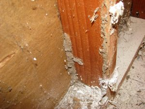 Termite Pre-Treatments can prevent thousands of rands in potential damages.