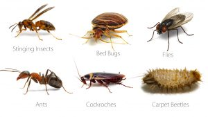 Pest Exterminator Johannesburg deal with any and all Pests in any environment.