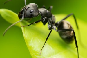 Ant Control Johannesburg by the industry Experts, Johannesburg Pest Control