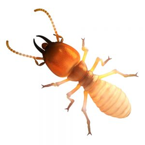 How to get rid of Termites in Johannesburg is a job for the professionals here at Johannesburg Pest Control