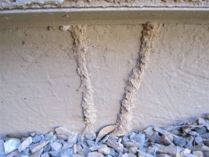 How to get rid of Termites in Johannesburg largely depends on spotting an infestation before it gets out of hand. Johannesburg Pest Control can inspect your premesis for signs of a termite infestation.